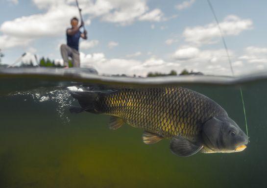 Best Carp Fishing Spots In France France Travel Blog