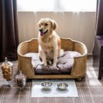 Best Pet-Friendly Hotels in Paris