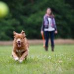 Best Pet-Friendly Parks In Paris