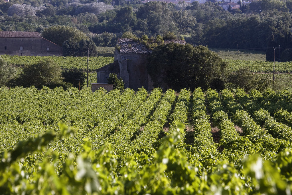 Languedoc Roussillon Best Wine Regions to Visit in France