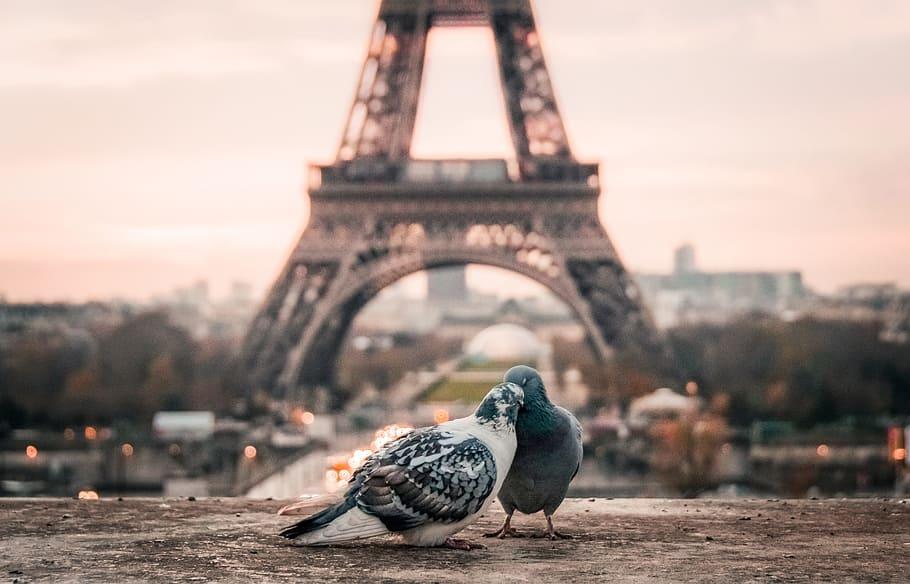Paris in valentines