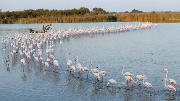 Camargue Wetlands South Of France Beaches