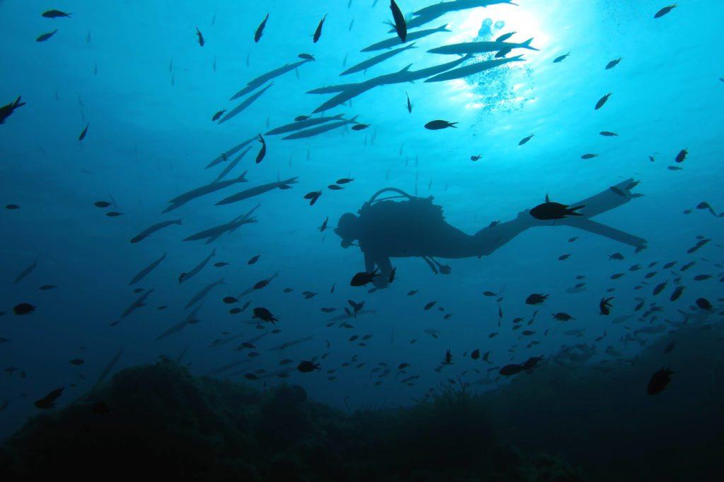Scuba Diving In South Of France Porquerolles Island