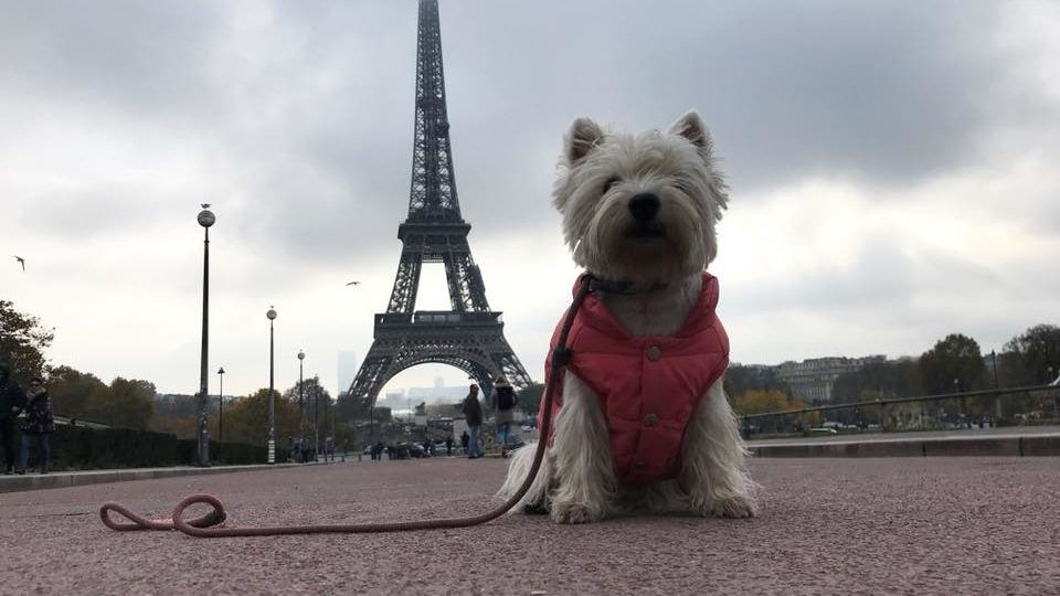 Things To Do In Paris With A Dog
