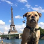 Where To Walk Your Dog In Paris
