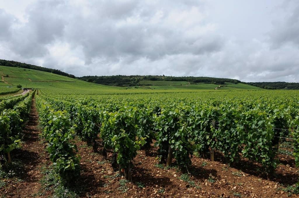 Burgundy Travel Blog Wine