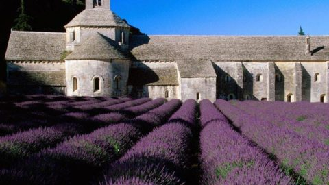 Top 10 Things To Do In Provence