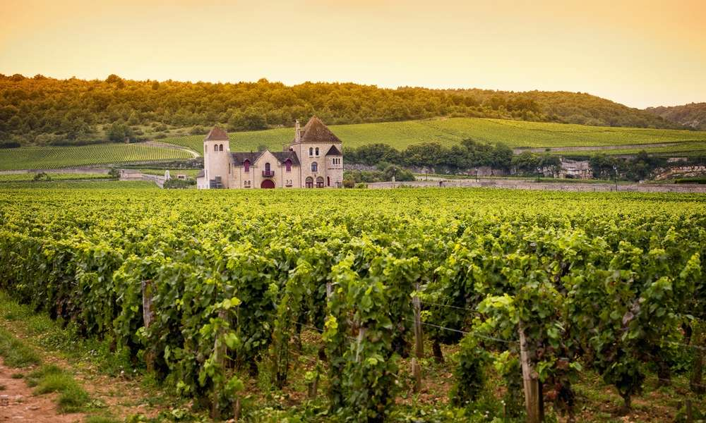 Cheap Visit to the Vineyards of France