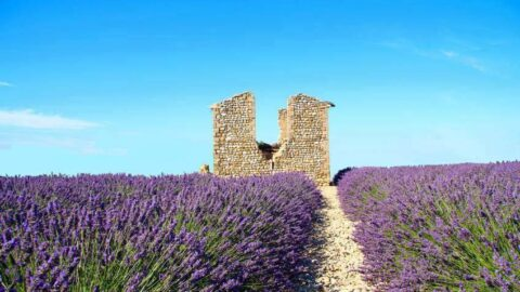 What is Provence Known For?