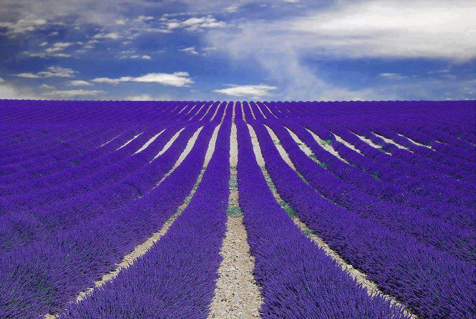 Things France is Famous For - Provence France