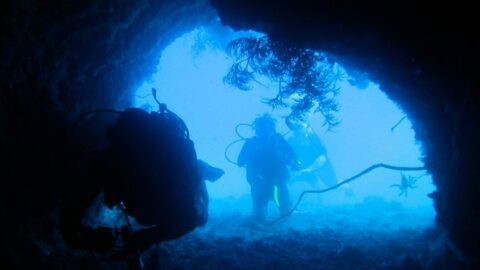 What You Need to Know Before Scuba Diving in France